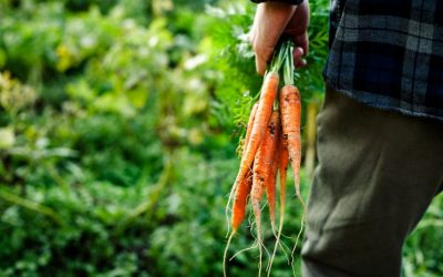 Stop Food Waste Day : Lutte contre le gaspillage alimentaire